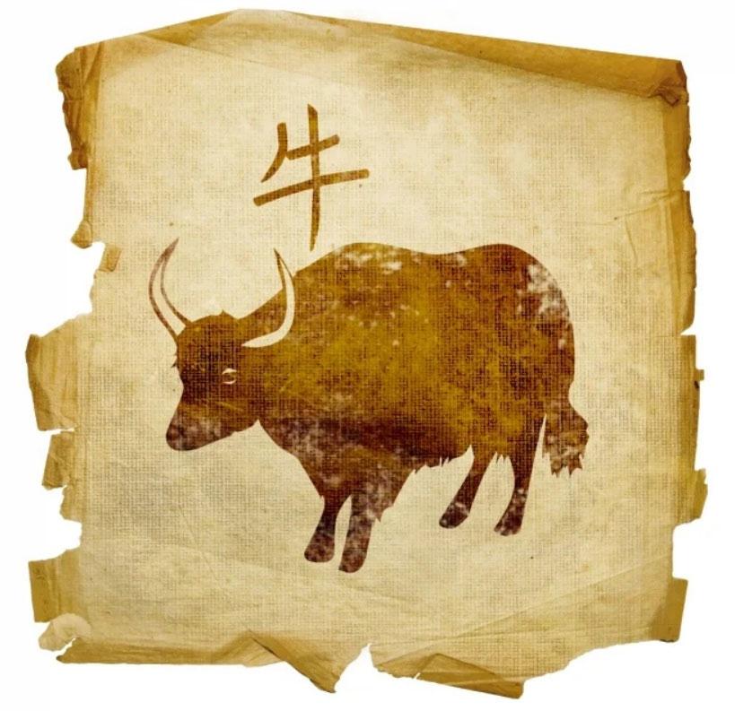 bawół - horoskop chiński