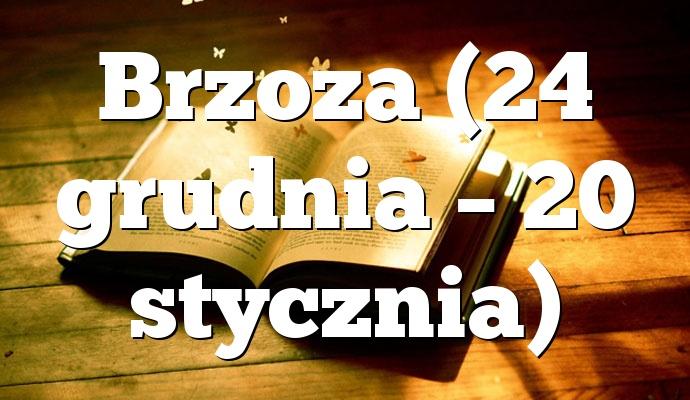 Brzoza (24 grudnia – 20 stycznia)