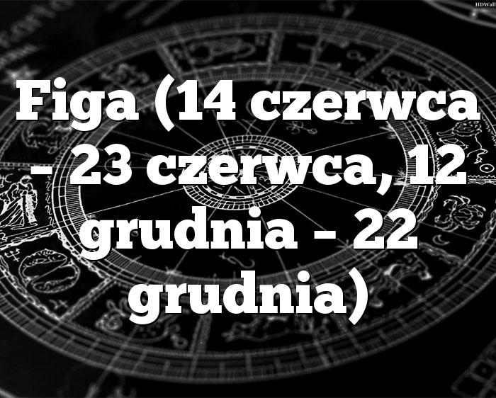 Figa (14 czerwca – 23 czerwca, 12 grudnia – 22 grudnia)