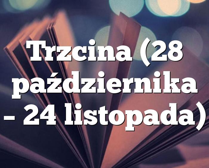 Trzcina (28 października – 24 listopada)