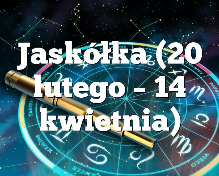 Jaskółka (20 lutego – 14 kwietnia)
