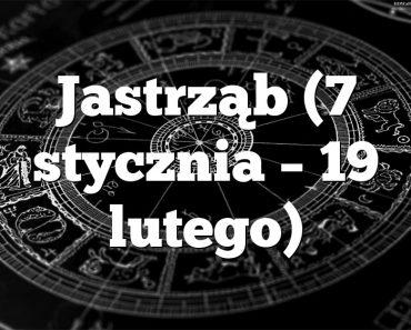 Jastrząb (7 stycznia – 19 lutego)