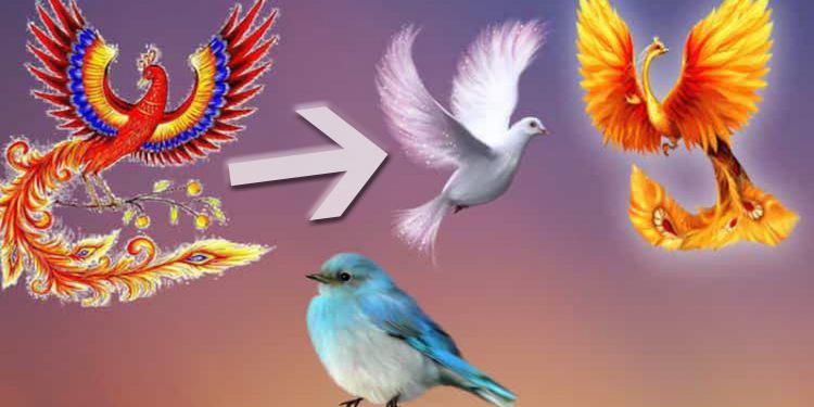 Ptaki to posłańcy losu. Wybierz jednego z nich i sprawdź, jaki dar przyniesie Ci w nadchodzących miesiącach