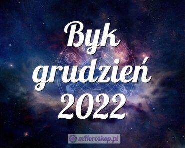 Byk grudzień 2022